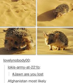 You know you're a part of the Sherlock fandom when all you can think about when you see hedgehogs is John.