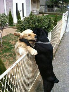 dogs hugging