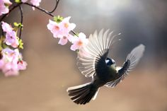 great tit by Na giseong