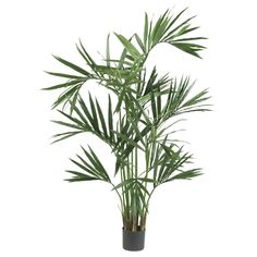 Enhance the beauty of any room with this silk kentia palm tree. This tree is five feet tall with a tropical palm feel and is completely maintenance free.