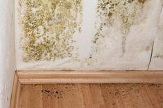 Plíseň na stěnách dokáže odstranit běžná jedlá soda – Domaci Tipy Bathroom Mold Remover, Mold In Bathroom, Bathroom Cabinets, Bathroom Ideas, Bathrooms, Cabinet Molding, Wall Molding, Toxic Mold, Get Rid Of Mold