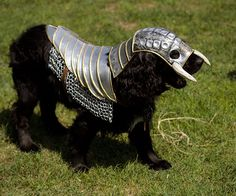 "Your canine ca-knight in shining armor has arrived! With one caveat: Lebovskiart, the Bulgarian designer of the shining armor, reports that his dog ""does not like very much these strange clothes."" But for him at least, ""it is big fun indeed!"" Cosplayers"