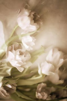 ☼ Midday Visions ☼ dreamy light & white art & photography -