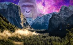 Harambe Over the Mountains