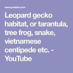 Leopard gecko habitat, or tarantula, tree frog, snake, vietnamese centipede etc. - YouTube