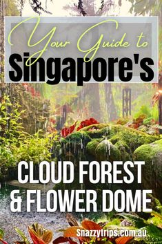 The Enchanting Cloud Forest Dome And Flower Dome In Singapore #cloudforest #flowerdome #singsporegardens #singaporegardensbythebay #singaporegreenhouses #cloudforestdome #cloudforestandflowerdome #snazzytrips Singapore Travel Tips, Singapore Itinerary, Luang Prabang, Laos, Oregon, Bag Essentials, Road Trip, Arizona, Indoor Waterfall