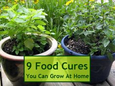 9 Food Cures You Can Grow At Home