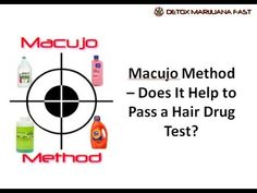 Macujo method remains the most effective hair cleansing method on the market in It is the oldest most popular legendary method used by marijuana users, with a success rate of over Find out here how Macujo Method will help you pass your hair drug test. Sugar Free Diet Plan, Free Diet Plans, Hair Follicle Drug Test, Belly Fat Burner Workout, Natural Detox Drinks, Best Weight Loss Foods, Homemade Detox, Best Detox, Detox Program
