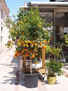 Les fleuristes de la place Bellecour à Lyon, c'est le printemps! Des kiosques sont installés d'un côté de la place où on y retrouve commerces et cafés, ils ont été refaits récemment pour notre plus grand plaisir!