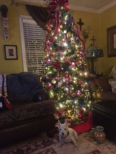 This years tree