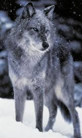 The Celestials : The Fall (Editing) - romance smut supernatural wolves exo kaixoc thecelestials - Rim Nara (OC), Kai , Exo.. Side characters ( Shinee, Beast ) - Asianfanfics