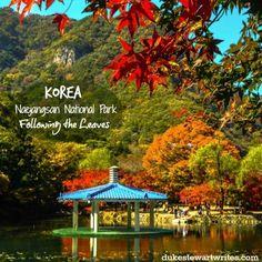 Korea's Naejangsan National Park - Following the Leaves. #travel #asia #nature