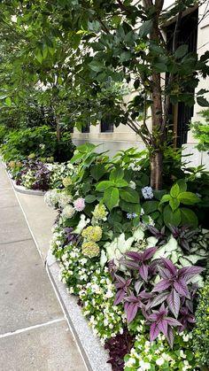 Stories • Instagram Garden Planters, Plants, Instagram, Flower Planters, Garden Container, Plant, Planets