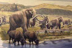 Columbian mammoths and bison- Blue Rhino Studios