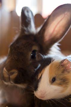 Adopt A Bunny, Bunny Rescue, Pet Pigs, Guinea Pigs, Cute Bunny, Adorable Bunnies, Diy Bunny Toys, Rabbit Eating, Bunny Care