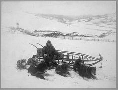 C.1912 United States Postal Service Dog Sled Team by GalleryLF, $6.00  An amazing picture of vintage working dogs.