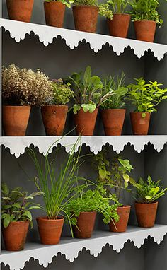 Create a kitchen garden with decorative metal shelf edging, Herb Garden, Garden Pots, Vegetable Garden, Garden Ideas, Metal Shelves, Growing Herbs, Terracotta Pots, Back Gardens, Outdoor Rooms