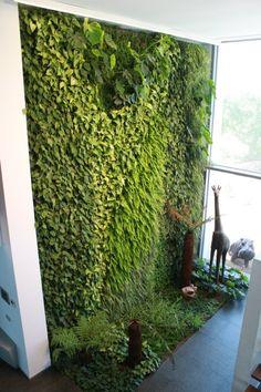Green wall. Pared verde. Muro verde.