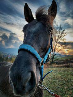 Horses, Animals, Backgrounds, Animais, Animales, Animaux, Horse, Animal