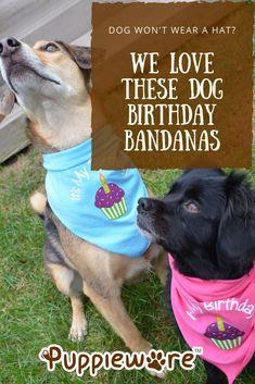 Adorable dog bandanas for a dog birthday Hound Dog Breeds, Cute Dogs Breeds, Cat Birthday, Animal Birthday, Birthday Ideas, Orange Tabby Cats, Dog Mixes, Girl And Dog, Dog Show
