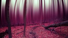 forest abstract trees leaves autumn surreal psychedelic f wallpaper background I Wallpaper, Wallpaper Backgrounds, Tree Leaves, Trippy, Psychedelic, Images, Nature, Pictures, Abstract Trees