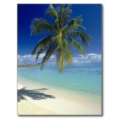 ==>>Big Save on          Matira Beach on the island of Bora Bora, Society Post Cards           Matira Beach on the island of Bora Bora, Society Post Cards Yes I can say you are on right site we just collected best shopping store that haveThis Deals          Matira Beach on the island of Bor...Cleck link More >>> http://www.zazzle.com/matira_beach_on_the_island_of_bora_bora_society_postcard-239556580940537634?rf=238627982471231924&zbar=1&tc=terrest