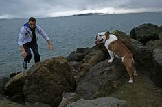 """For Warriors' Klay Thompson, time with dog is time well spent  The Warriors were crossing t's and dotting i's on Klay Thompson's $70 million contract extension last month when the 24-year-old hit general manager Bob Myers with a peculiar question.  Thompson wanted to know how much longer the proceedings might take.  """"We were trying to get the contract signed, and all he wanted to do was go home to his dog,"""" Myers said.  To truly know the Warriors' newly minted shooting guard — the one many…"""