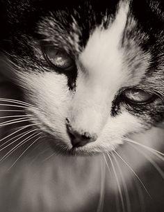 #Caturday(9)