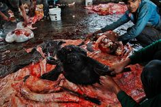 Slaughterhouse Kathmandu Nepal 2014 C. Bantlin