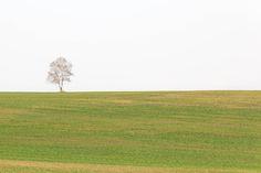Spring by Hiroteru Hirayama on 500px