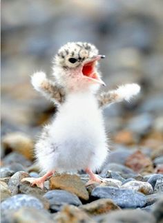 cute baby eagles - Google Search
