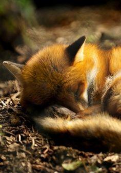 #Süßer kleiner #Fuchs. #Tiere ♥ stylefruits Inspiration ♥