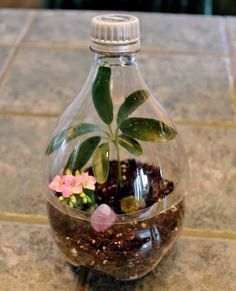 plastic bottle art Learn the steps you need to take to make a Coke bottle terrarium in a few easy steps. It's not like your average soda bottle terrarium! Terrarium Diy, Bottle Terrarium, How To Make Terrariums, Bottle Garden, Plastic Terrarium, Ecosystem In A Bottle, Terrarium Wedding, Bottle Bottle, Reuse Plastic Bottles
