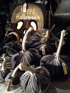 in stores - Velvet Pumpkins by Hot Skwash