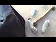 Puppies Skateboarding. It's killin' me.
