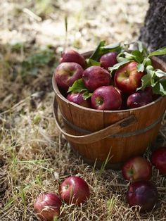 I want to go apple picking!