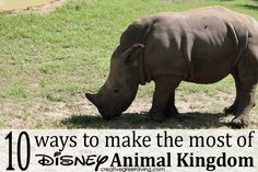 10 Ways to Make the Most of Your Trip to Disney World's Animal Kingdom Theme Park ~ Creative Green Living