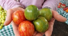 Heirloom Seeds 101: Why They're Better In The Garden And On The Table