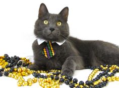 Looks like my buddy, Max!   Extra small dog/cat Mardi gras beads necktie collar. $10.00, via Etsy.