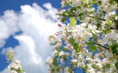Nature and landscape photography Forest Flowers, Widescreen Wallpaper, Spring Blossom, Flower Photos, Landscape Photography, Nature, Plants, Pictures, Image