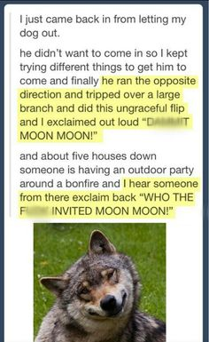 Funny pictures about Who invited Moon Moon? Oh, and cool pics about Who invited Moon Moon? Also, Who invited Moon Moon? Funny Shit, Funny Cute, The Funny, Funny Memes, Hilarious, Funny Stuff, Funny Things, Videos Funny, Funny Tumblr Posts