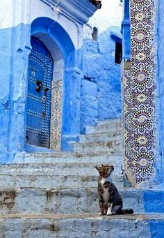 Chefchaouen - I truly appreciate Moorish architecture, and cats Travel Photography Inspiration, Travel Inspiration, Art Photography, Beautiful World, Beautiful Places, Belle Photo, Shades Of Blue, Scenery, Windows