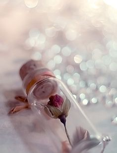 rose in a bottle Ana Rosa Mini Bottles, Bottles And Jars, Small Bottles, Belle Image Nature, Bottle Charms, Glass Bottle, Bottle Jewelry, Glass Vials, Foto Art