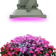 30W Hydroponic Plant Flood LED Grow Lights Bulb Lamp Lighting Blue 460nm Red 630nm