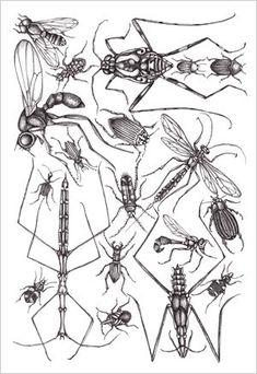 Patterns and Designs - Joyce hamillrawcliffe - Álbumes web de Picasa