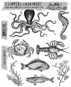 Stampers Anonymous Tim Holtz Rubber Stamps - Sea Life CMS304