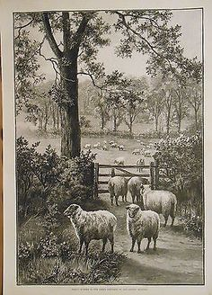 ENGLISH COUNTRYSIDE SHEEP FLOCK IN PASTURE FARM ANIMALS ANTIQUE PRINT
