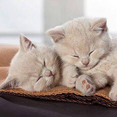 Dos gatitos preciosos.