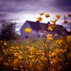"""""""Buttercup Farm"""" by humanremains   RedBubble. warmth, flowers, tranquility."""