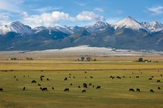Westcliffe, CO - will be spending some time here!
